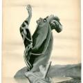Hedda Sterne, Feminine character, 37 x 48 cm