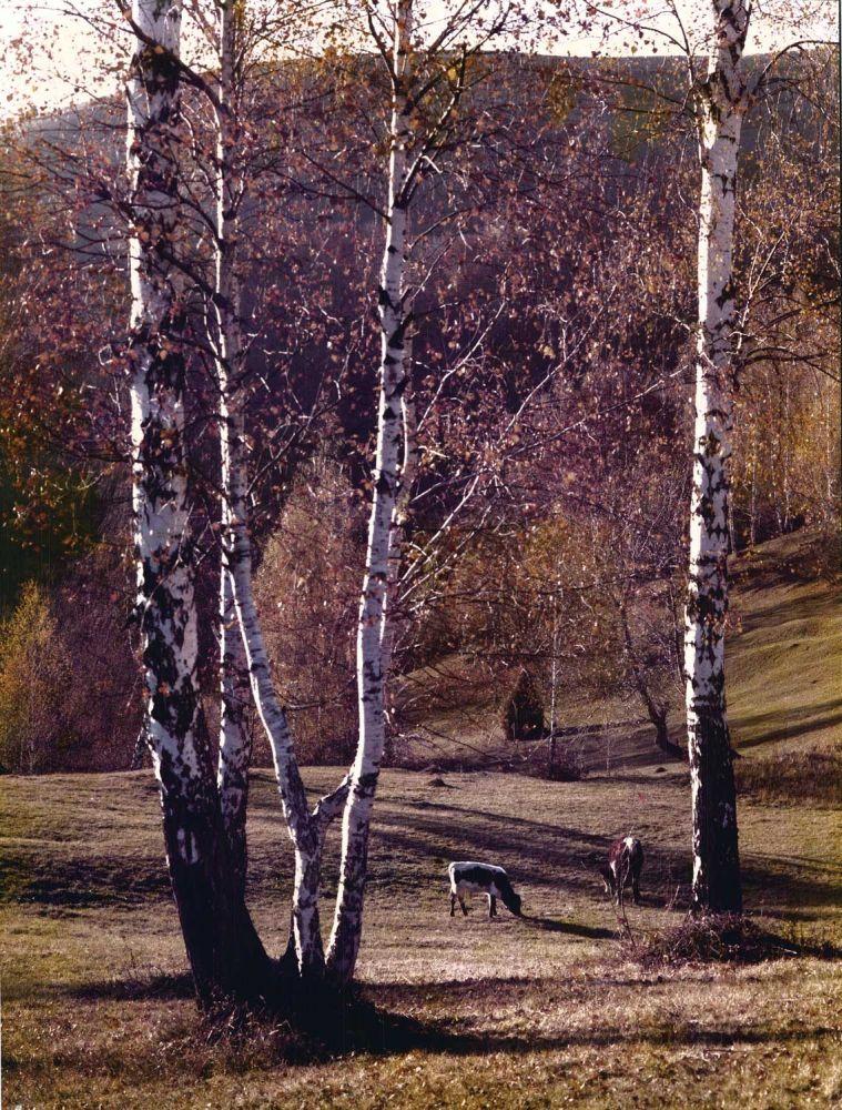 Marx Jozsef, Muntii Apuseni, Tara Motilor, Premiul Hercules 1990, 29.5 x 39 cm
