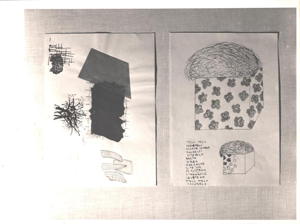 Pavel Ilie, Mel mel codobelc, 25x19 cm, fotografie alb, negru, semnata pe spate